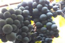 Vinicola Vinhos Don Severino, Caxias Do Sul, Brazil