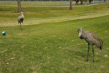 Kissimmee Golf Club, Kissimmee, United States