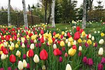 Royce Rose Garden, Sapporo, Japan