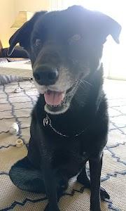Wagtastic Pet Care,LLC