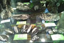 Fossils Galore, March, United Kingdom