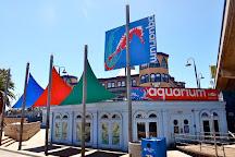Santa Monica Pier Aquarium, Santa Monica, United States