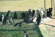 Southern African Foundation for the Conservation of Coastal Birds, Port Elizabeth, South Africa
