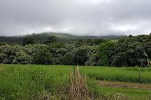Hana Maui Botanical Gardens, Hana, United States
