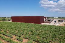 Celler Tianna Negre, Binissalem, Spain