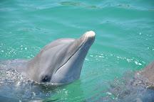 Dolphin Discovery Los Cabos, San Jose del Cabo, Mexico