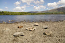 Bassenthwaite Lake National Nature Reserve