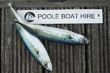 Poole Boat Hire, Poole, United Kingdom