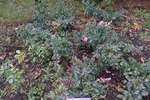 Rose Garden, Montreal, Canada