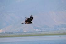 Wular Lake, Srinagar, India