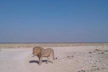 Alter Action Sandboarding, Swakopmund, Namibia