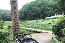 Fukiageshobu Park, Ome, Japan