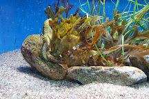 Aquarium of the National Marine Fisheries, Woods Hole, United States