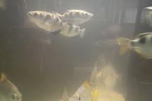 Public Aquarium of Brussels, Brussels, Belgium