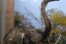 Museu de Historia Natural do Parque Municipal Danilo Galafassi, Cascavel, Brazil