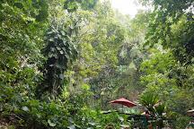 Fern Grotto, Kauai, United States