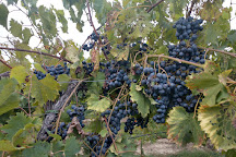 Layton's Chance Vineyard and Winery, Vienna, United States