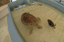 Old Hegg Turtle Sanctuary, Park Bay, St. Vincent and the Grenadines
