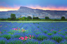 Visit Grand Junction, Grand Junction, United States