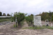 Sorell Fruit Farm, Sorell, Australia