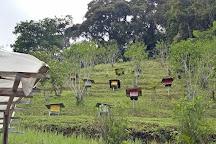 Highlands Apiary Farm, Ringlet, Malaysia