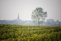 Clos des Quarterons - Amirault, Saint Nicolas de Bourgueil, France