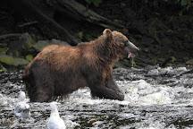 Pack Creek on Admiralty Island, Alaska, United States