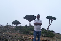 Diksam, Socotra Island, Yemen