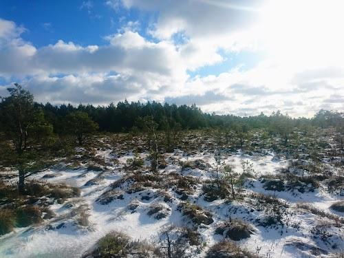 Koigi bog and hiking path