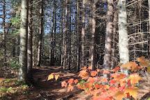 Centennial Ridges Trail, Algonquin Provincial Park, Canada
