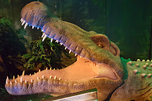 Museum of Tropical Queensland, Townsville, Australia