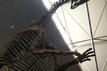 Dinosaur Museum, Zhucheng, China