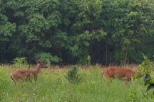 Wildwood Preserve Metropark, Toledo, United States