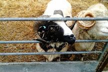 Seven Sisters Sheep Centre, East Dean, United Kingdom