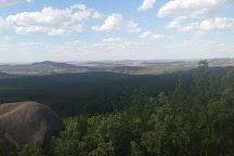 Pierces Creek Forest, Paddys River, Australia