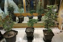 Hash Marihuana & Hemp Museum, Amsterdam, The Netherlands