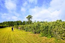 Moorhead's Blueberry Farm, Conroe, United States