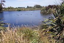 Styx Mill Conservation Reserve, Christchurch, New Zealand