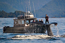 Sitka Wildlife Adventures, Sitka, United States