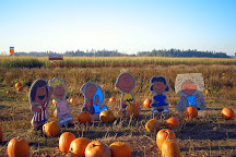 Foster's Produce, Corn Maze and Pumpkin Patch, Arlington, United States