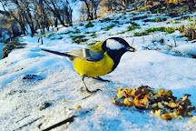 Botanical Garden to them. NN Grishko, Kiev, Ukraine