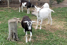 Catapano Dairy Farm, Peconic, United States