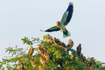 Blackbuck National Park, Velavadar, India