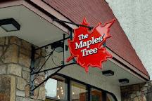 The Maples' Tree, Gatlinburg, United States