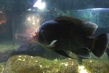 Nemo Dolphinarium, Kiev, Ukraine