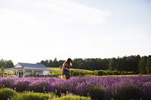 Secret Garden at Brys Estate, Traverse City, United States