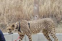 Project Survival's Cat Haven, Dunlap, United States