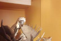Musee d'histoire Naturelle, Autun, France