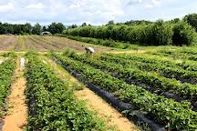 Cox Berry Farm & Nursery, Clarksville, United States