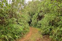 Reserva La Rivera, Salento, Colombia